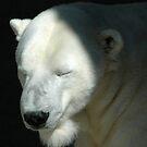 Polar Bear by DebYoung