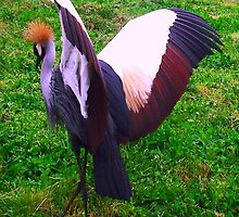 Crowned Crane by Dawn B Davies-McIninch
