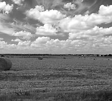 The Hay is Harvested by John Thomason