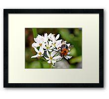 """Bee on White Allium """"Graceful"""" Framed Print"""