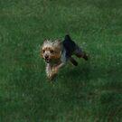 Run Forrest Run! by Jamie Lee