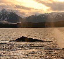 Autumn Whale Blows by Gina Ruttle  (Whalegeek)