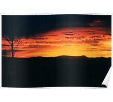 Lone Tree- Arizona sky Poster