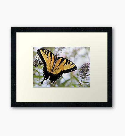 Garden Lover Framed Print