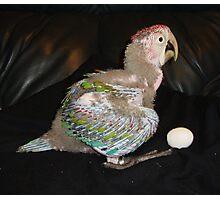 Macaw 6 Weeks Photographic Print