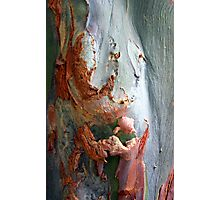 Flesh Bark Photographic Print
