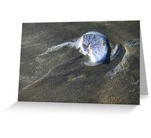 Swirling Sand Dollar Greeting Card