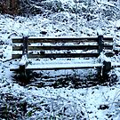 The Bench in Snow by Lisa Brower