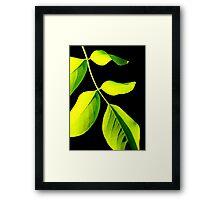 Acacia #2 Framed Print