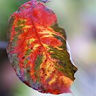 Colorful Fall Leaf by Themossgirl