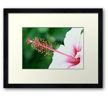 Hibiscus hello Framed Print
