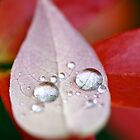 Water Droplets on Blueberry Leaf by Themossgirl