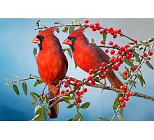 Red Birds and Red Berries Photographic Print