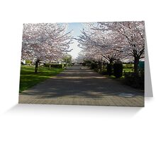 Spring Time flowering cherry trees Greeting Card