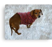 Snausage In A Sweater Canvas Print