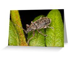 Weevil on leaf Greeting Card
