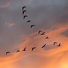 Canada Geese, Sunset by Steven David Johnson