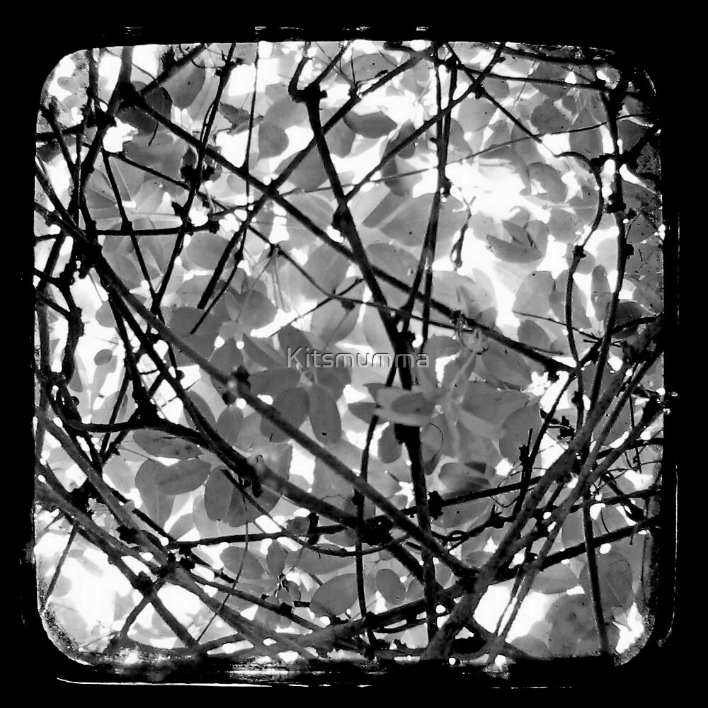 The Chocolate Vine Through The Viewfinder (TTV) by Kitsmumma