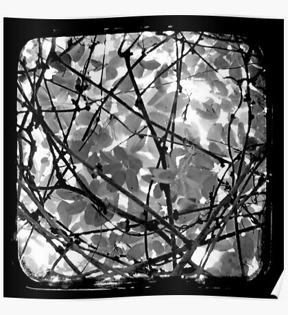 The Chocolate Vine Through The Viewfinder (TTV) Poster