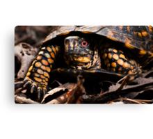 Box Turtle, Virginia Canvas Print