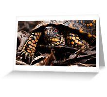 Box Turtle, Virginia Greeting Card