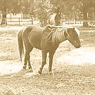 Old Fashioned Pony by Adah