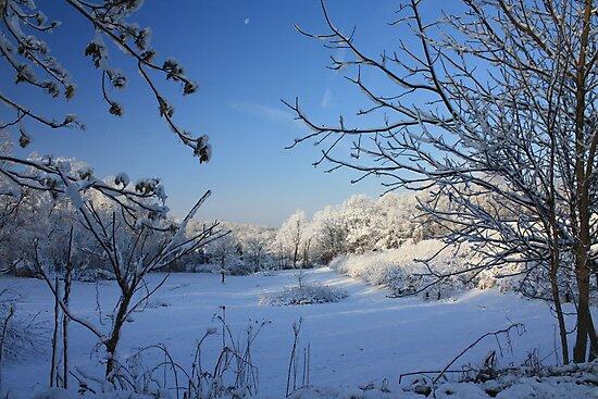 New Fallen Snow by Lori Deiter