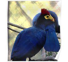 I love blue birds Poster