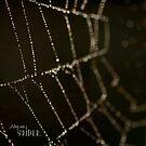Along Came a Spider by Lisa Knechtel