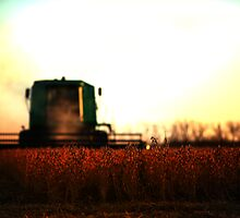 The Harvest 1 by Scott Bosworth