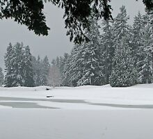 Snowy Golf Course by Barb White