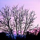 Backyard Sunset by martinilogic