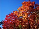 Glory Dayzzzzzz by NatureGreeting Cards ©ccwri