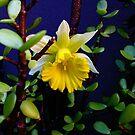 rogue daffodil by strykermeyer