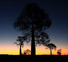 outback silhouettes by Tony Middleton