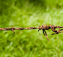 Barbed Wire fence - Mount Warning - Australia by Anthony Wilson