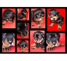 Clyde Collage - Cute Overload Photographic Print