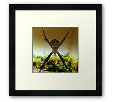 PATIENCE  A VIRTUE Framed Print