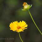 Summer Colour by Malcolm Katon