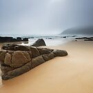 Noosa National Park in Fog by Bill Owens