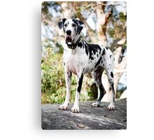 Sparkles the Great Dane Canvas Print