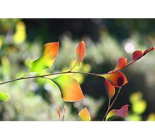 Native Colours.. Photographic Print