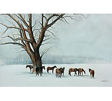Horses in the Snow Photographic Print