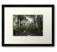 Autumn in Dunottar Woods Framed Print