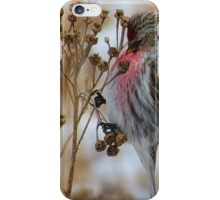 The Clinging iPhone Case/Skin