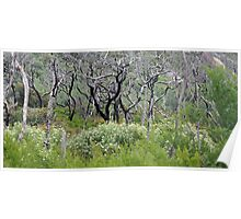 Recovery - Wilsons Promontory, Victoria Poster