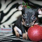 Merry Christmas by jujubean