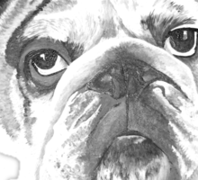 "Monochrome American Bulldog  ""Yale"" Sticker"