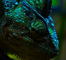 Mr Ray the Chameleon  by Rose Seymour