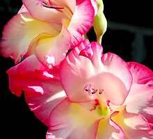 Gladiolas by Tony Ramos